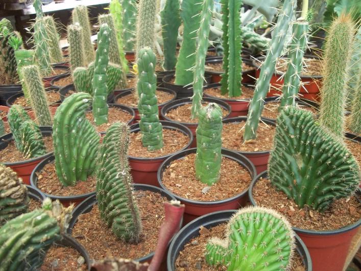 Vivero vida verde en ober tel fono y m s info for Viveros y plantas