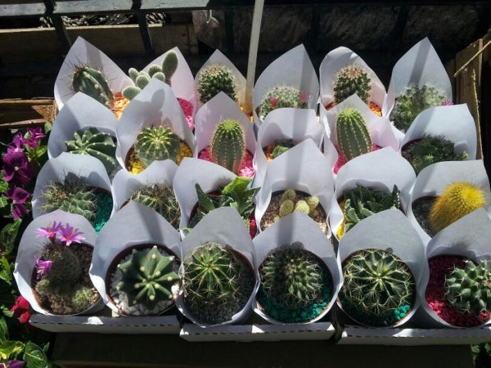 Elviveruski-plantas y accesorios para jardin en Hurlingham. Teléfono ...