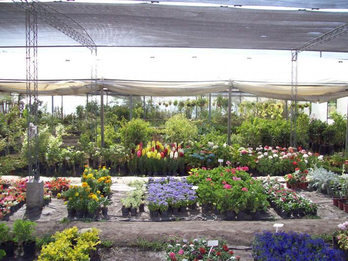 Vivero mill n arboles forestales frutales plantas de for Vivero mi planta