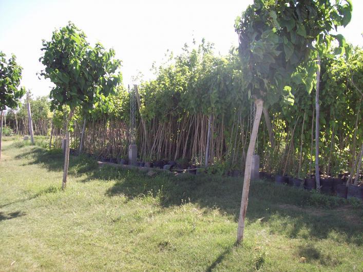 Vivero mill n arboles forestales frutales plantas de for Viveros arboles frutales