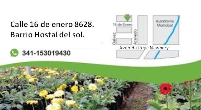 Vivero naranjo en flor en rosario tel fono y m s info for Viveros en rosario